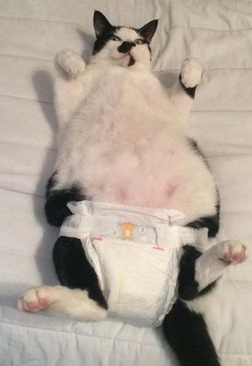 catnappy