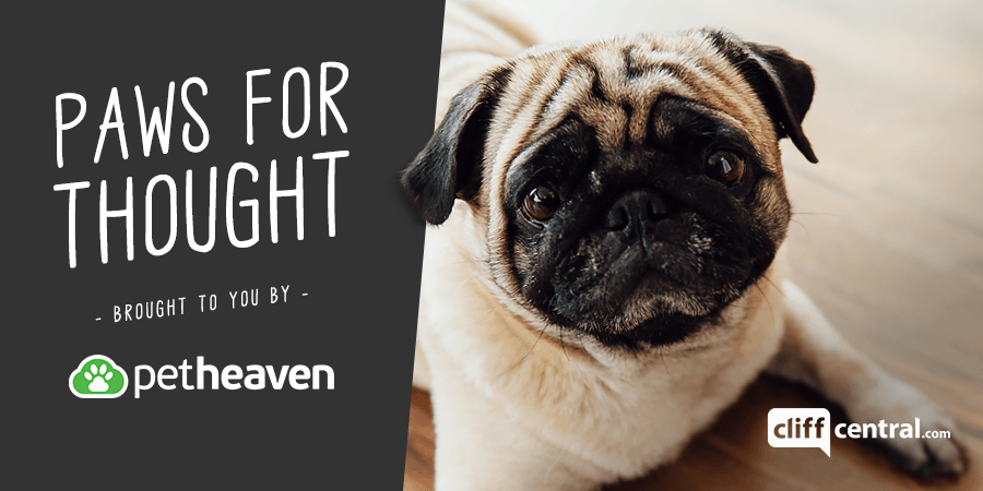Paws for Thought - brought to you by Pet Heaven